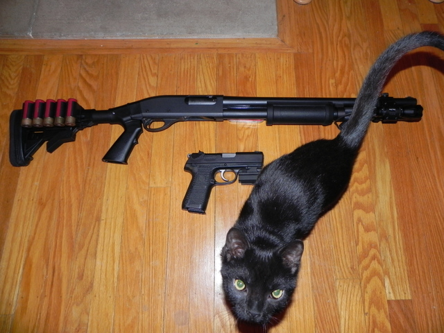 Reminton 870 and Ruger P95DC and Kitten