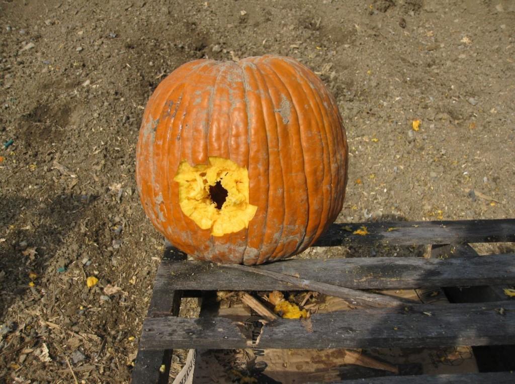Shotgun Pumpkin Carving Contest